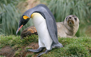 Seal & penguin care